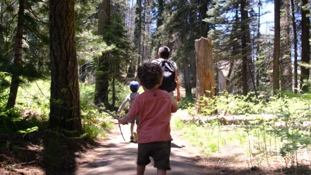 family walking yosemite national park, california, redwoods, sequoia, usa - yosemite national park bildbanksvideor och videomaterial från bakom kulisserna
