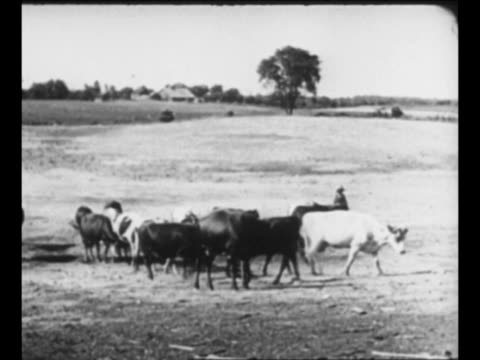 family walks out of dilapidated house / ws hungry cattle look for food / wipe / starving horse in field / wipe / desiccated field / hands take pieces... - dust bowl stock videos and b-roll footage