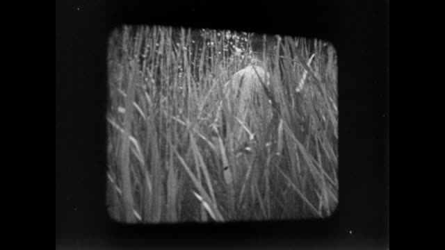 stockvideo's en b-roll-footage met montage a family watching old footage on a projector of clearing farmland / london, united kingdom - 1946