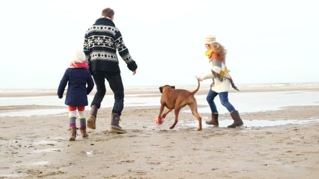 vídeos de stock e filmes b-roll de ms ts family with dog playing football on beach - um animal