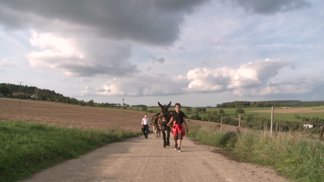 vidéos et rushes de ws family with donkey at walking tour / mannebach, rhineland-palatinate, germany                             - animaux au travail