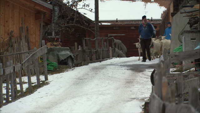 ws family with goats on streets of snowy swiss village / gimmelwald, berner oberland, switzerland - gimmelwald stock videos & royalty-free footage