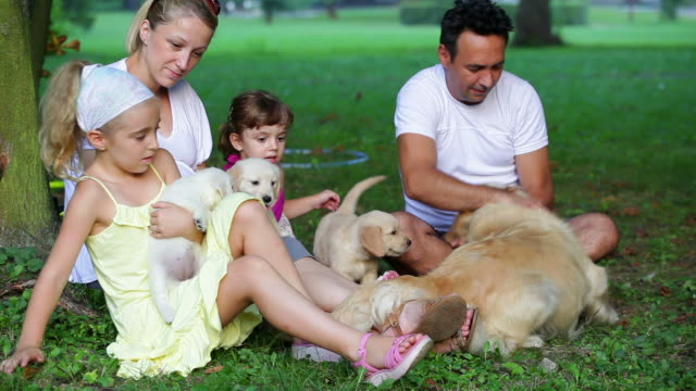 family with puppies in park - pampering stock videos & royalty-free footage