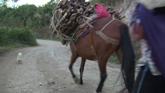"""""""family with small fluffy dog and pack bearing horse travel along gravel road on hillside, amazonas region of peru [perãº]"""" - horse family stock videos & royalty-free footage"""