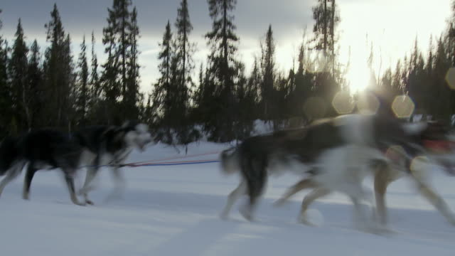 MS, Family with two children (12-17 months, 6-7) dog sledding, Hemsedal, Norway