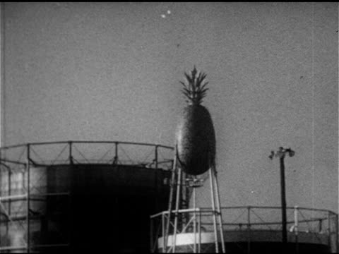 vidéos et rushes de famous dole pineapple shaped water tower above cannery ws workers harvesting pineapple fruit onto combine machine conveyor belt ms pineapples moving... - 1953