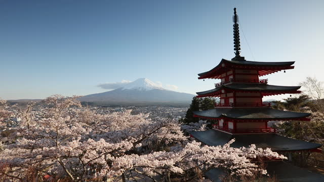 famous pagoda and mt fuji with cherry blossom - shrine stock videos & royalty-free footage