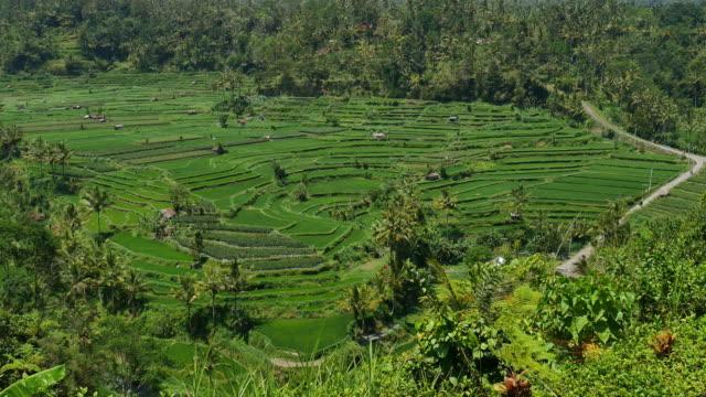 有名な「ライス」のテラスで、インドネシアバリ島ティルタガンガ近く