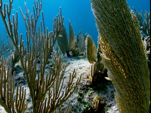 fan corals and other soft corals wave in the ocean's current. - other stock videos & royalty-free footage