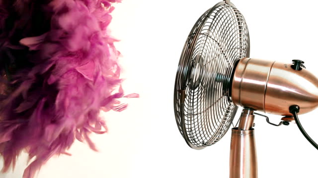 fan with feather