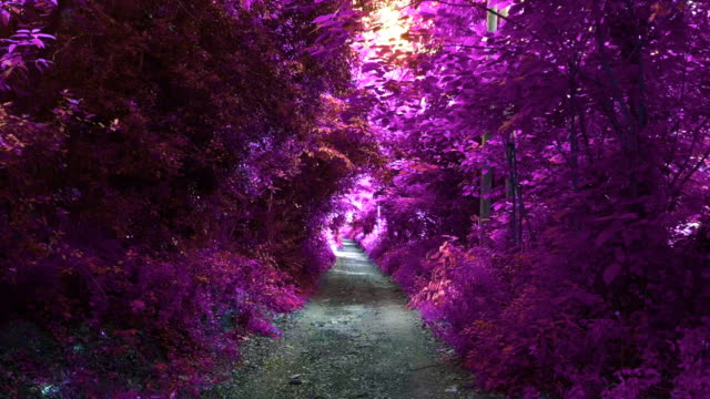 fantasy view of infrared landscape with purple colors in stunning path. - vanishing point stock videos & royalty-free footage