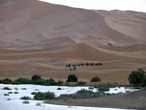 vídeos y material grabado en eventos de stock de a far away view of people riding camels through the desert towards a river - brida arnés
