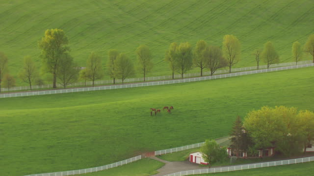 ms aerial zo farm anat calumet farm / versailles, kentucky, united states - kentucky stock videos & royalty-free footage