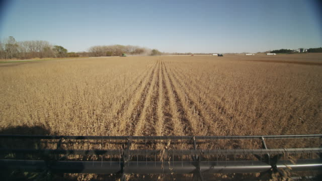 vídeos de stock, filmes e b-roll de pov farm combine drives down rows of soybeans in a large field. a second combine is harvesting in the distance. - soja