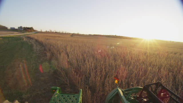 farm combine is dropped into a field of soybeans and begins harvesting the golden crop as the sun sets on the horizon. - soybean stock videos and b-roll footage