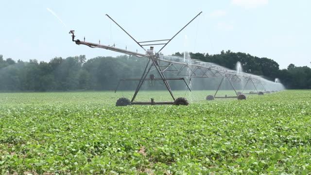 farm raccolto l'irrigazione - attrezzatura per l'irrigazione video stock e b–roll