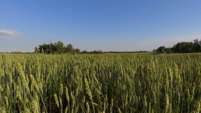 farm crops - abundance stock videos & royalty-free footage