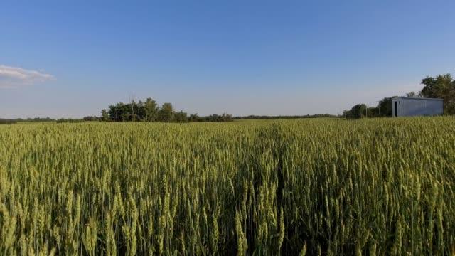 farm crops - edmonton stock videos and b-roll footage
