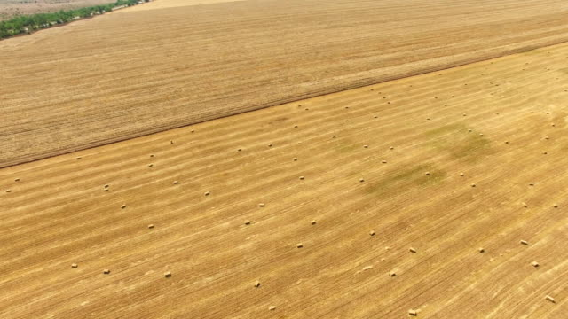 aerial: farm fields after harvesting in autumn - multicopter stock videos & royalty-free footage