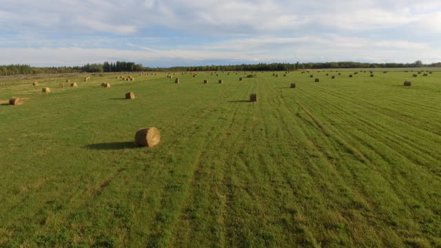 farm fields - plain stock videos & royalty-free footage