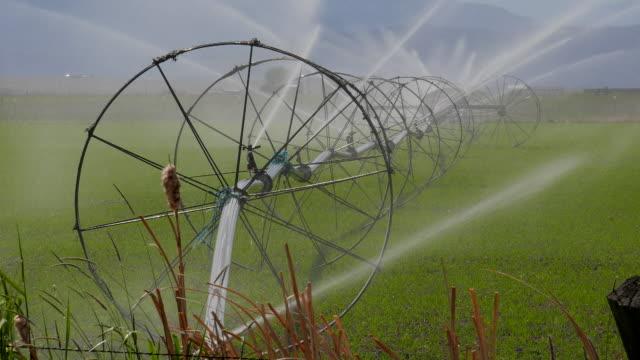 farm irrigation wheel spraying - bulrush stock videos & royalty-free footage