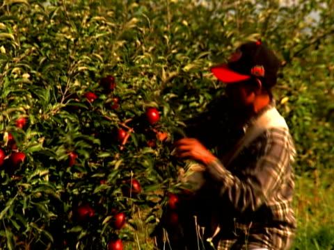 vidéos et rushes de farm labor - ouvrier agricole