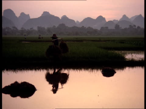 a farm laborer carries bales of rice across a field near the guilin mountains in asia. - 1994 stock videos and b-roll footage