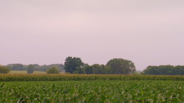 farm land, corn fields - moving past stock videos & royalty-free footage