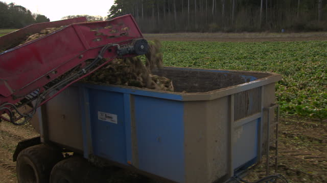 farm machinery harvesting sugar beet crop, uk - beet stock videos & royalty-free footage