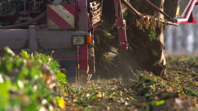 farm machinery harvesting sugar beet crop, uk - tractor stock videos & royalty-free footage