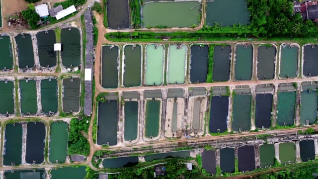 farm of shrimp ponds in countryside - prawn animal stock videos and b-roll footage