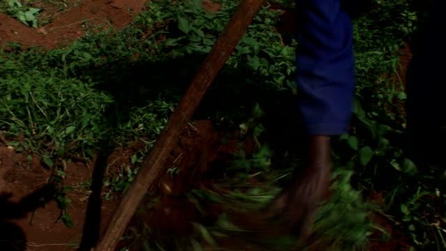 農場 - ウガンダ点の映像素材/bロール
