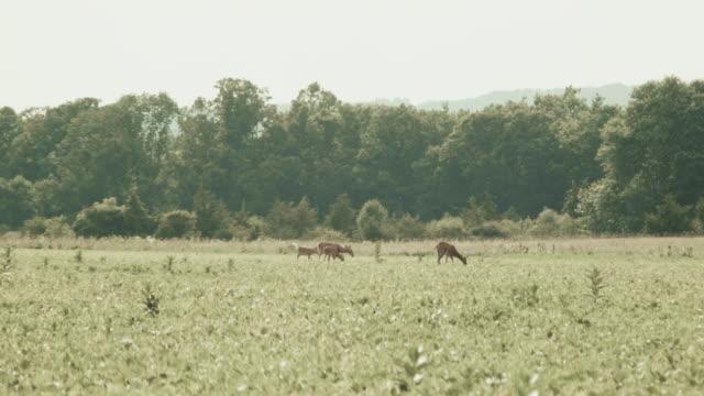 stockvideo's en b-roll-footage met farm visuals - vier dieren