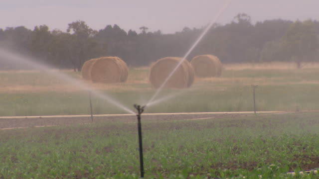 farm wide view crop sprinkler watering/spraying green leaves of young crop hay bales in the background - hay background stock videos & royalty-free footage