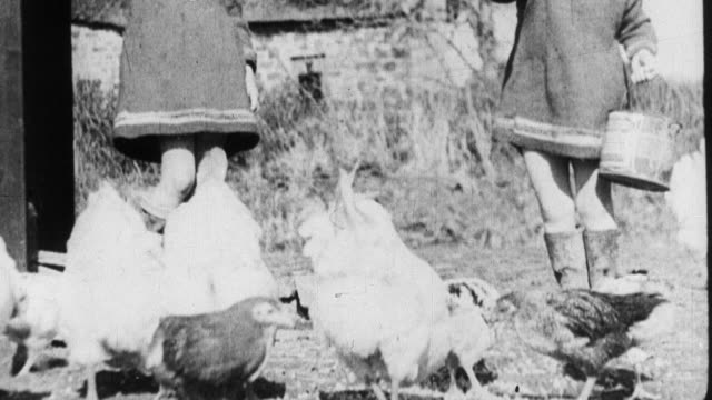 1933 montage farm wife and children feeding chickens outside, and baby chicks eating inside of hen house / united kingdom - 鶏小屋点の映像素材/bロール
