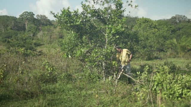farm worker cutting brush with a machete in brazil - cutting stock videos & royalty-free footage