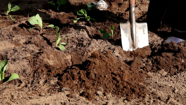 farm worker digging a planting hole - hole stock videos and b-roll footage