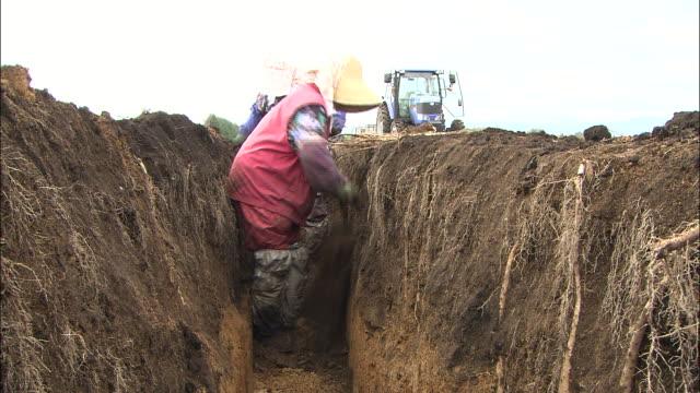 a farm worker digs chinese yams. - 農作業点の映像素材/bロール