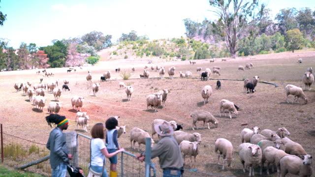 farm worker guiding family through a tourist farm - ranch family stock videos & royalty-free footage