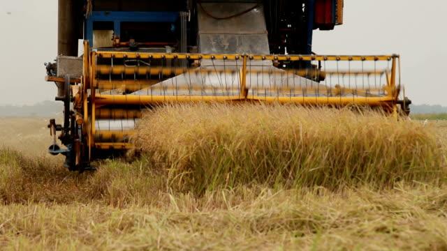 vídeos de stock, filmes e b-roll de trabalhador rural colheita de arroz com máquina de combinar - arroz alimento básico