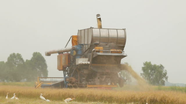 farm worker harvesting rice with combine machine - rice stock videos & royalty-free footage