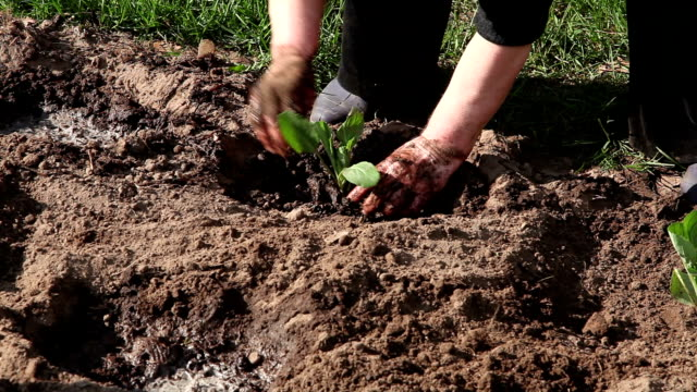 farm worker planting seedlings - farm worker stock videos & royalty-free footage