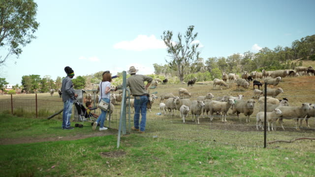 Farm worker showing his sheep to a family