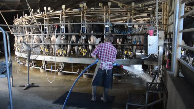 Farm worker washes down the milk shed floor as the cows stand on the slowly rotating milking platform at Pearson Farm north of Moama New South Wales...