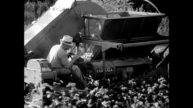 vídeos de stock, filmes e b-roll de farm workers driving cotton machine through field machine power cotton picking on april 01 1942 - pegando frutos