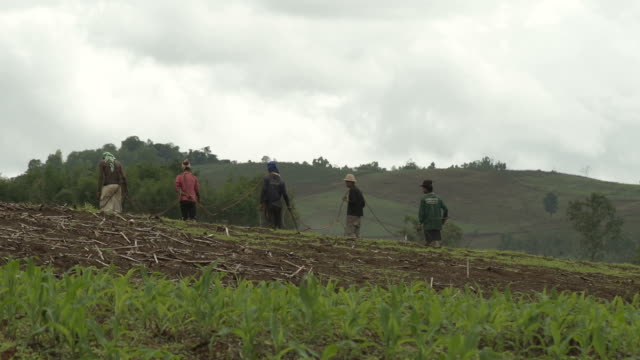 L/S farm workers fumigating crops