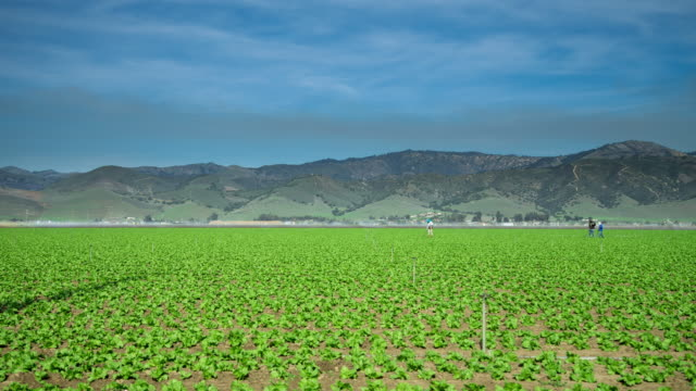 farm workers in central california - motion control timelapse - 農林水産関係の職業点の映像素材/bロール