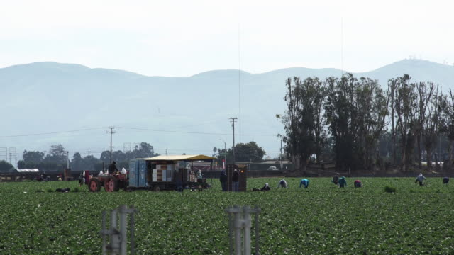 farm workers in the field picking and packing agriculture in slowmotion - farm worker stock videos & royalty-free footage