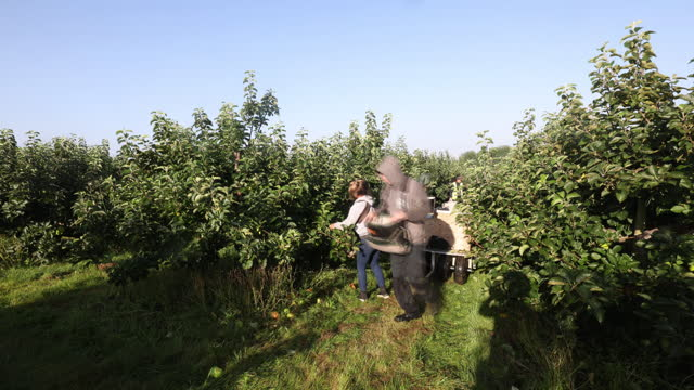 farm workers picking bramley apples during a harvest in coxheath, kent, u.k., on thursday, september 16, 2021. - apple fruit stock videos & royalty-free footage