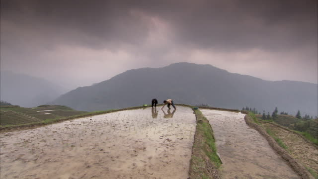 stockvideo's en b-roll-footage met farm workers plant rice on terraced paddies. available in hd. - cereal plant
